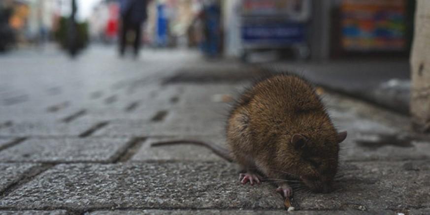 Çin'de yeni virüs ortaya çıktı! 30'dan fazla kişi karantinada