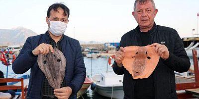 İki Türk Girişimciden Çılgın Proje, Siyanürden 1200 Kat Daha Zehirli Balon Balığı'ndan Elde Ettiler